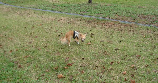 コム係長とお散歩、、、秋の一日