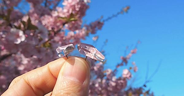 桜を身に纏うガラスピアス。