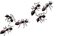 先日私、蟻さんになりました!